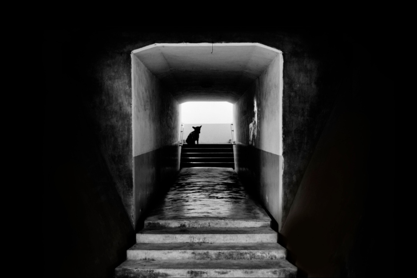 tunnel-dog